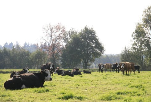A test to include unregistered rare Dutch cattle in the herd book