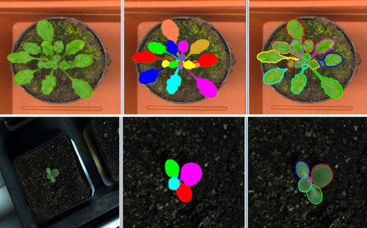 Test images (left), separate leaves labelled by an expert (middle), automated leaves segmmentation performed by our fully automated method (right)