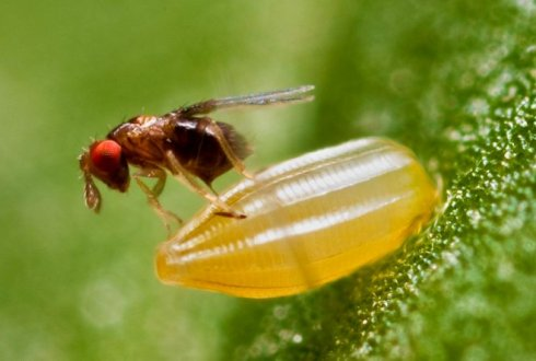 Biological control of pest insects using genetic knowledge