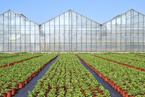 Greenhouse radiation efficiency