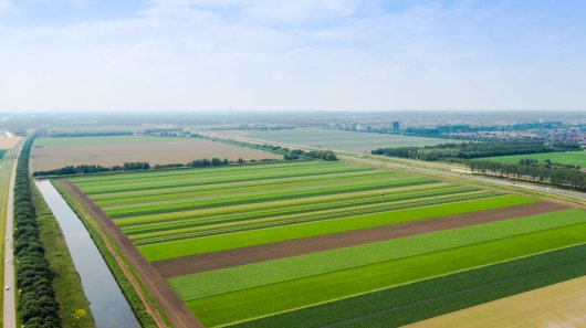 Stripcropping in the Netherlands