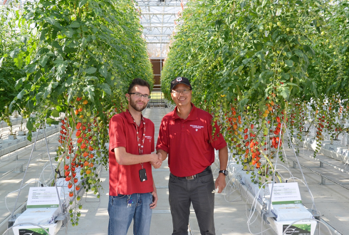 First tomatoes from greenhouse research facility Australia