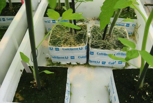 Prevention of excessive root growth caused by bacteria
