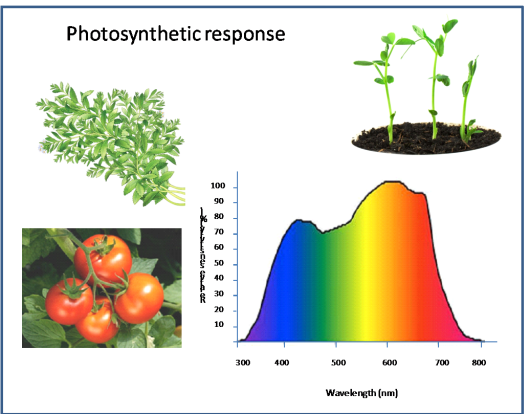 Figure 1. Plant response in Photosynthetically Active radiation range