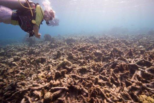 koraalrif.jpg