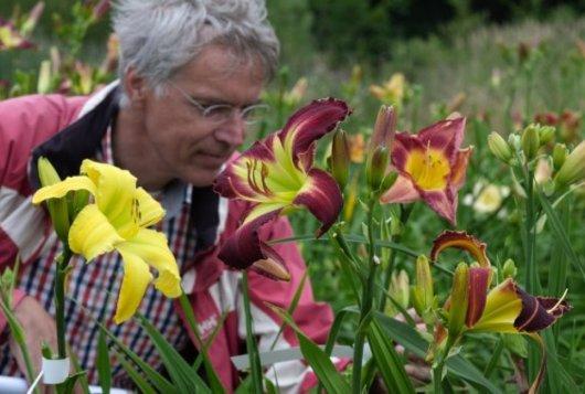 Project daglelies van The Field krijgt vervolg in Belmonte Arboretum