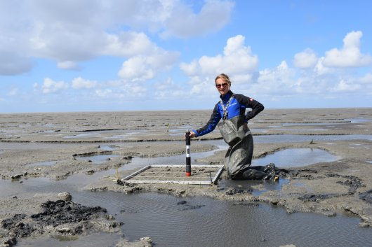 Scientists of Wageningen University & Research study the effects of dredge sediment disposal - a Mud Motor - on salt marsh expansion and nature-based coastal defense in the Dutch Wadden Sea. Photo: Robbert Jak