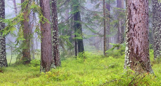 Managing Europe's forests under conflicting objectives