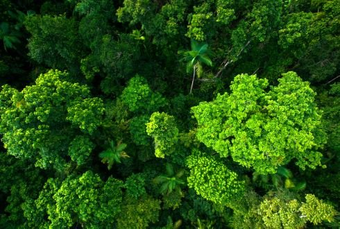 Wageningen scientists propose new evolution model for tropical rainforests