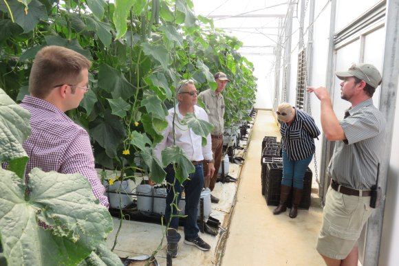 South Africa: unlimited possibilities to produce in greenhouses