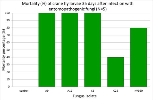 Mortality of crane fly larvae