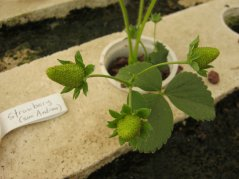 Close-up of plant in aquaponics system