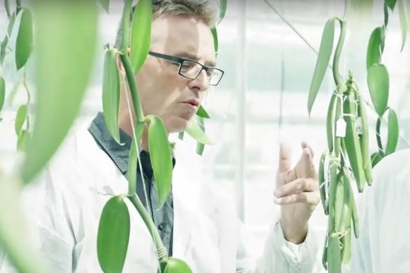 Filip van Noort explains in a video how growing vanilla works