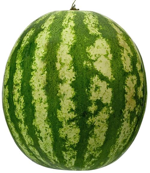 understanding melons wur
