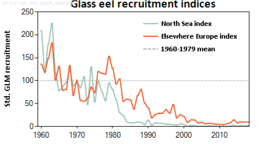Glasseelrecruitmentindices_2019.png