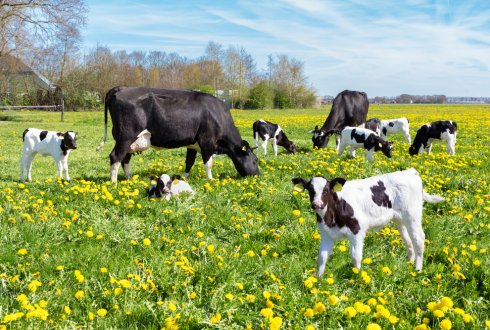 The utility of sensor technology to support reproductive management on dairy farms
