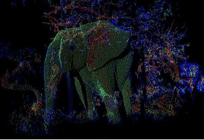 Elephant Billy is getting scanned during the fieldwork in Gabon