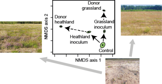 Effect of soil inoculation with two inocula shows that plant community composition is directed in the direction of either of the respective donor communities.