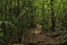 Loss of global forest biodiversity can cost billions a year