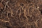 Vital soil saving techniques being trialled as International Year of Soils and COP21 come to an end