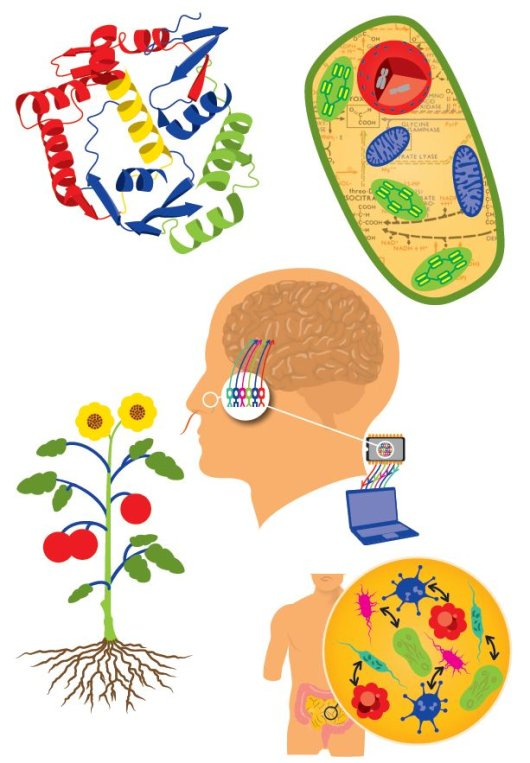 9 questions about Synthetic Biology - How does it work? - WUR