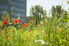 Maaien watergangen en knippen hagen langs Droevendaalsesteeg