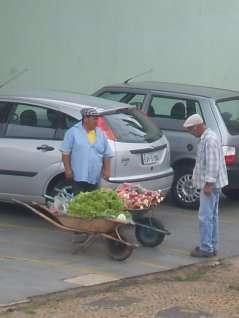 Large opportunities for intensive horticulture in Brazil