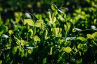 Strong support to feed the world through boosting photosynthetic potential