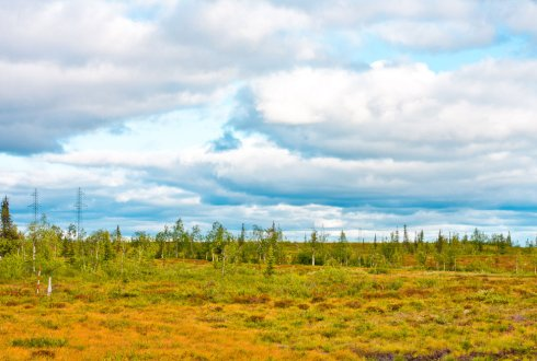 A clash of plants. Vegetation succession and its interaction with permafrost dynamics in the Arctic lowland tundra