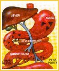 Overgeven en diarree tegelijk