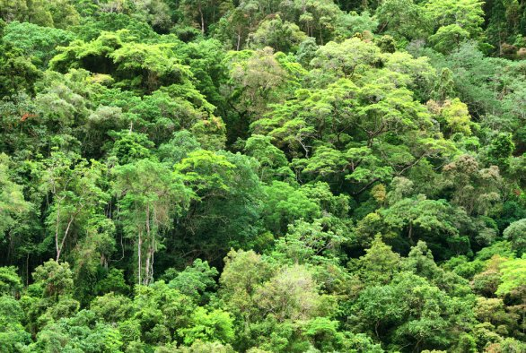 The mountain vegetation of South Peru: Syntaxonomy, Ecology, Phytogeography and Conservation