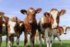 Meten van methaanemissies uit varkens- en vleeskalverenstallen_veehouderijenklimaat