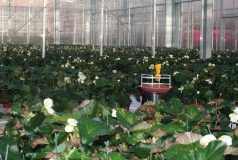 sugar station, biological control of mealybugs, sugar extends lifespanduur