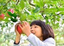 Worldwide innovative and sustainable growing of fruit