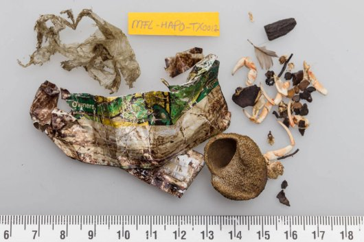 Extreme stomach content of harbour porpoise #TX0012, with sheetlike plastic litter, but also small pebbles, a shell, crab remains, a bird feather and bog-wood