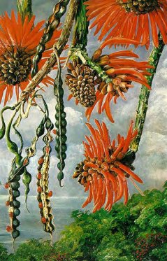 Tropical plant painted by Marianne North