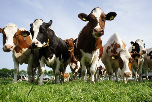 wageningen livestock research projecten