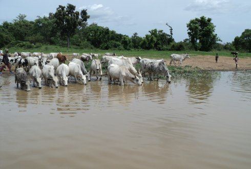 Understanding complexity in managing agro-pastoral dams ecosystem serices in Northern Benin