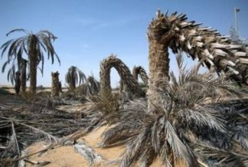 Assessing Date Palm Health Using Remote Sensing The Case