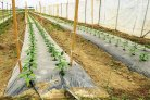 Fertigation Bible gives vegetable farmers tools for circular water usage