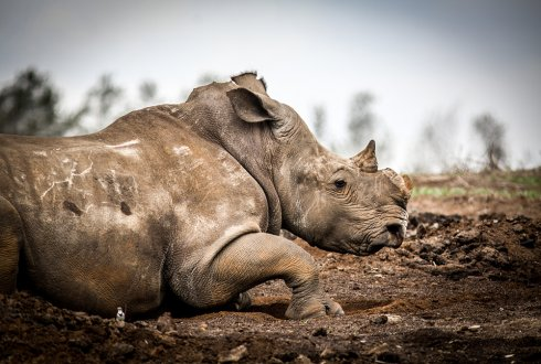 Wildlife Crime: Prevention of Poaching