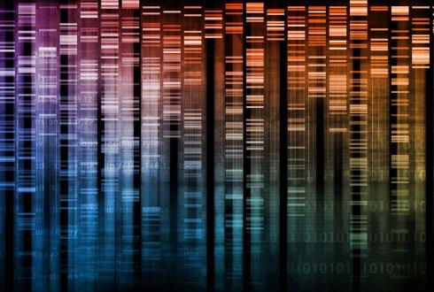 Characteristics of genetic markers: Genomic abundance - WUR