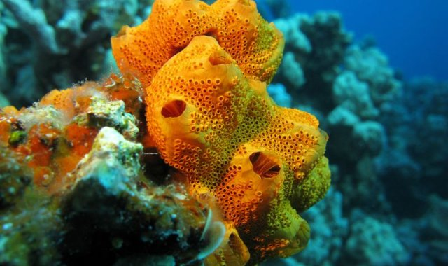 Sponges can clean water at fish farms