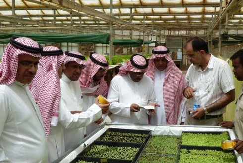 arab policymakers in greenhouse