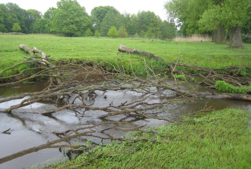 Stream restoration: nature-based solutions