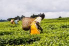 How to lift smallholder farmers out of poverty and protect the environment