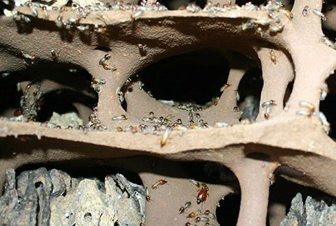 Plant Life newsletter about termites and fungi