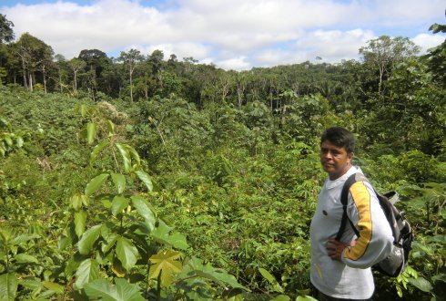 Regrowing secondary tropical forests sequester large amounts of carbon