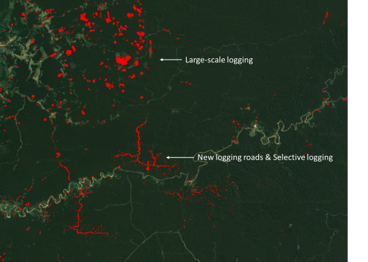 a.	Sentinel-1-based deforestation alerts (Central Peru, 2019 – 2020). Large-scale logging activities, logging road developments and selective logging activities are detected.