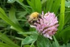 New report gives overview wild bees and hoverflies in various types of landscape